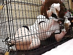 Kigurumi despatch-case there cage, vassalage with an increment of breathplay.